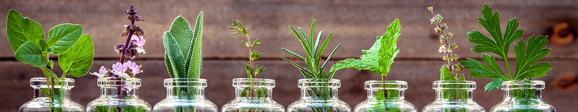 Herbs in bottles
