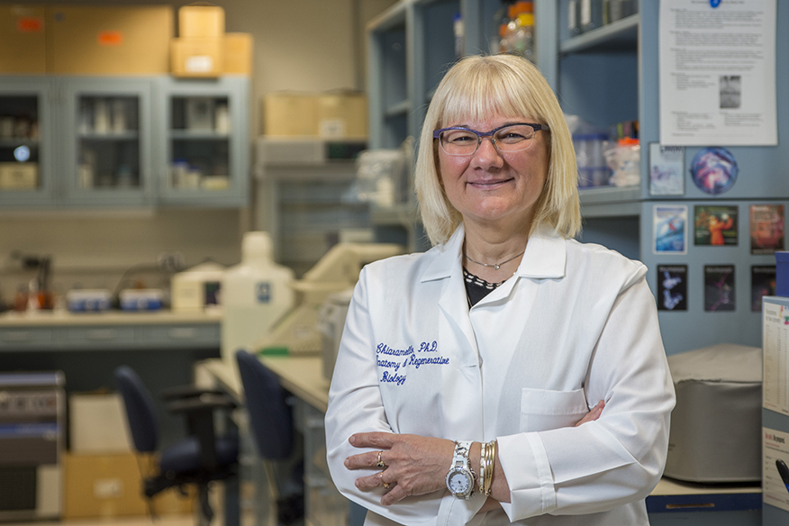 photo of Anne Chiaramello, PhD, associate professor of anatomy and cell biology